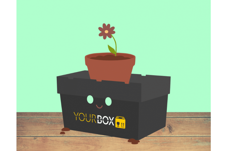 box-blume